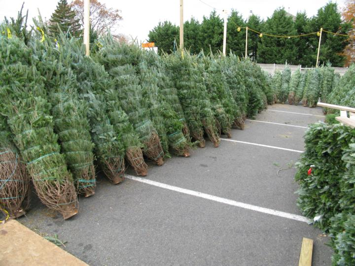 Christmas Trees For Sale.Christmas Trees Prepped For Sale In North Arlington Arlnow Com