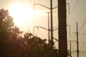 """W&OD Trail Summer Power Lines"" by Tyler Zarfoss"