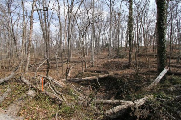 A portion of the Arlington Woods, which will be preserved