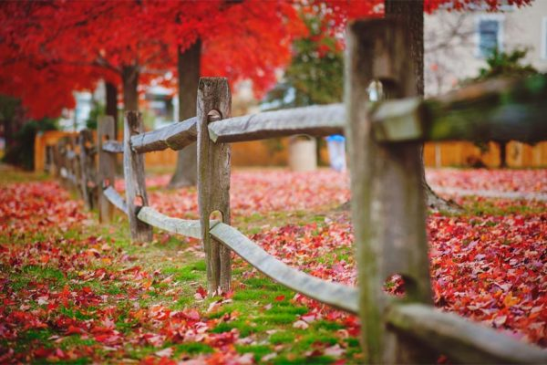 Red leaves falling by Maryva2