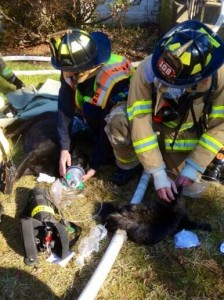 McLean house fire dog and cat rescue