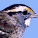 Christmas bird count at Potomac Overlook Park