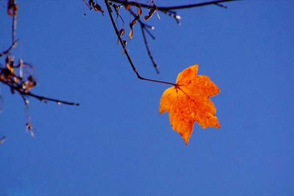 Leaf holdout (Flickr pool photo by Philliefan99)