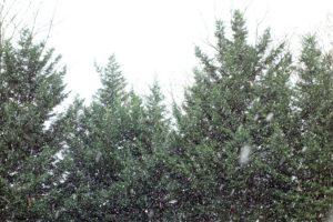 Snow on Dec. 8, 2013 by J. Sonder