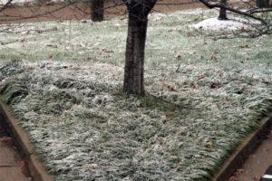 Snow starting to stick in Pentagon City