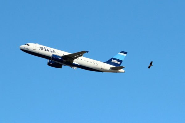 An eagle flies in view of a JetBlue flight departing from Reagan National Airport (photo courtesy Becky Barnes)
