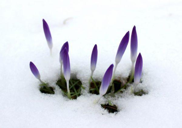 Sign of spring (Flickr pool photo by ksrjghkegkdhgkk)