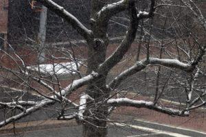 Snow falls on 3/25/14 (file photo)