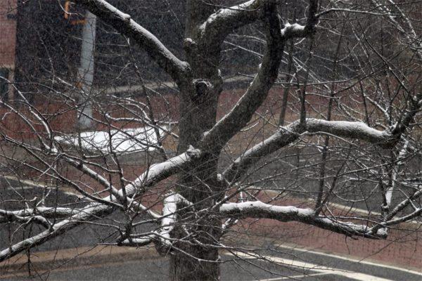 Snow falls on 3/25/14
