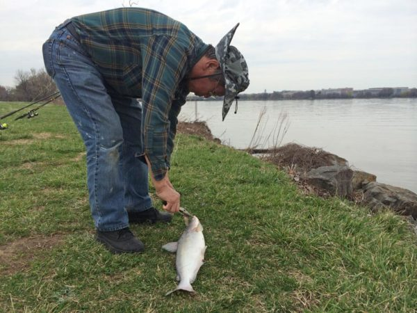 A fisherman removed the hook from his catch at Gravelly Point
