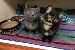 Daisy (right) and Tulip (photo courtesy AWLA)
