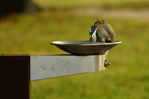 Squirrel in a water fountain (Flickr pool photo by Wolfkann)