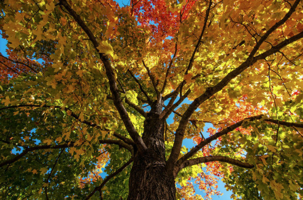 Changing Colors (Flickr pool photo by Nathan Jones)