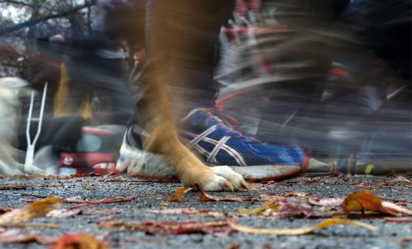 A person and a dog participate in Thursday's Arlington Turkey Trot 5K (Flickr pool photo by Kevin Wolf)