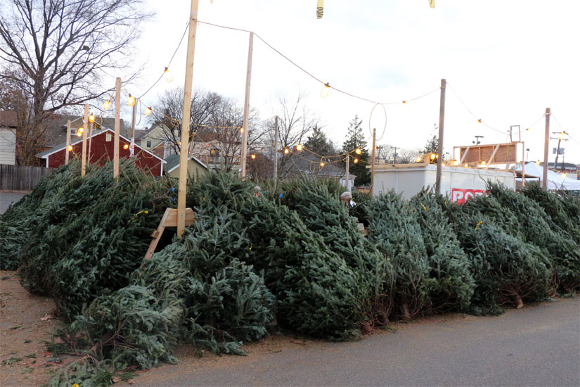 Where To Buy Christmas Trees Near Me Part - 20: The Optimist Clubu0027s Christmas Tree Sale At 2213 N. Glebe Road