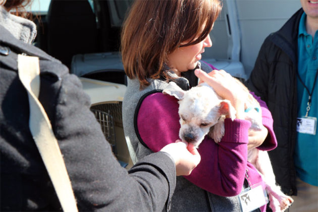 AWLA Communications Director Kerry McKeel holds Billy as he gets a treat
