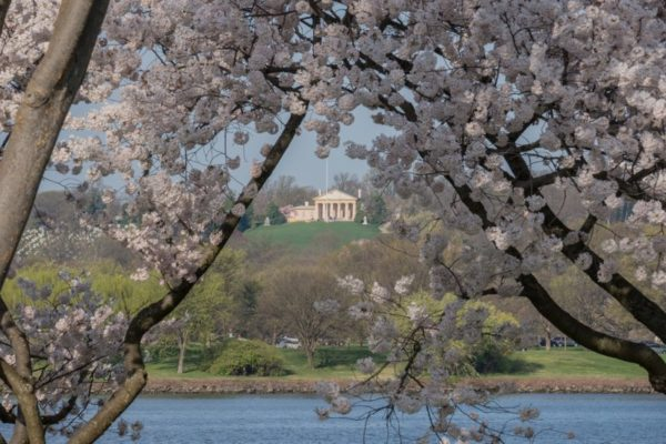 Cherry blossoms and Arlington House (Flickr pool photo by Kevin Wolf)