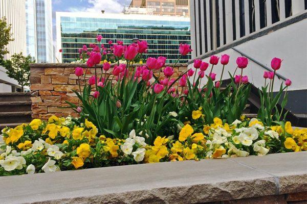 Flowers outside a Rosslyn office building