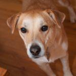 A dog (photo courtesy Rena Schild)