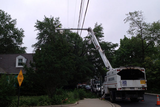 Dominion contractors trim a Willow Oak off of S. Veitch Street. Photo courtesy of Margaret Alvord.