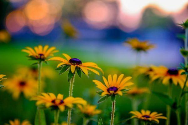 Flowers in Arlington (Flickr pool photo by Erinn Shirley)