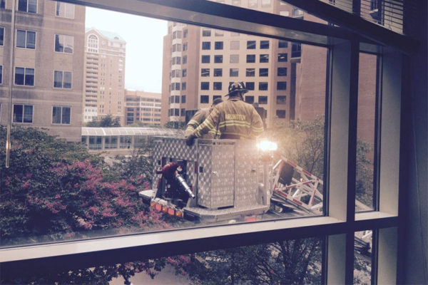Firefighters rescue a cat in Ballston (photo courtesy @B_Flipn)