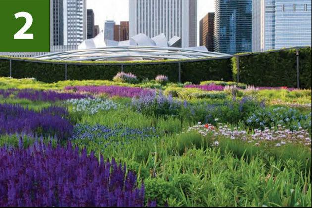 Garden option for central space (via Arlington County)
