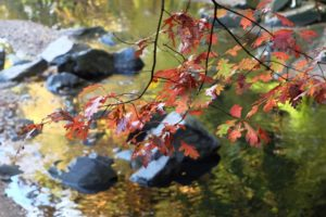Autumn leaves and a stream (Flickr pool photo by Vandiik)