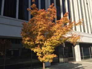 Minor fall foliage outside of a Rosslyn office building