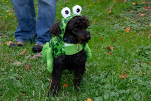 Dog in costume (Courtesy of Doorways for Women and Families)