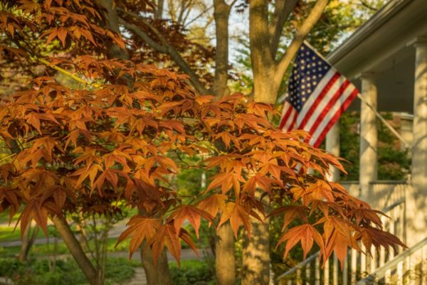 Autumn leaves and the American flag (Flickr pool photo by Kevin Wolf)