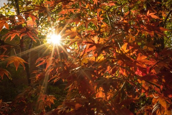 Sun shining through autumn leaves (Flickr pool photo by Kevin Wolf)