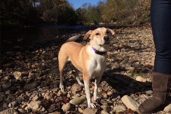 A dog along the banks of Four Mile Run near Shirlington