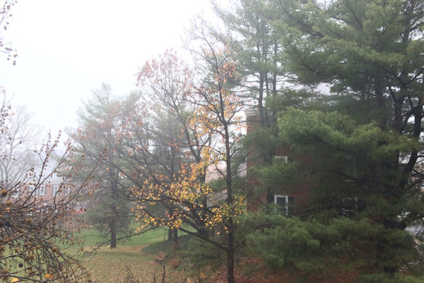 Foggy in Fairlington on 12/2/15