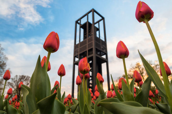 Tulips in bloom at the Netherland Carillon (Flickr pool photo by Joseph Gruber)