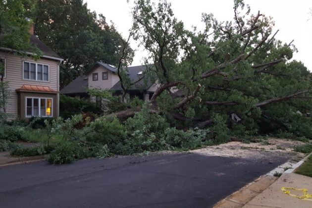 Fallen tree in Ashton Heights (photo courtesy Elizabeth Lyon)