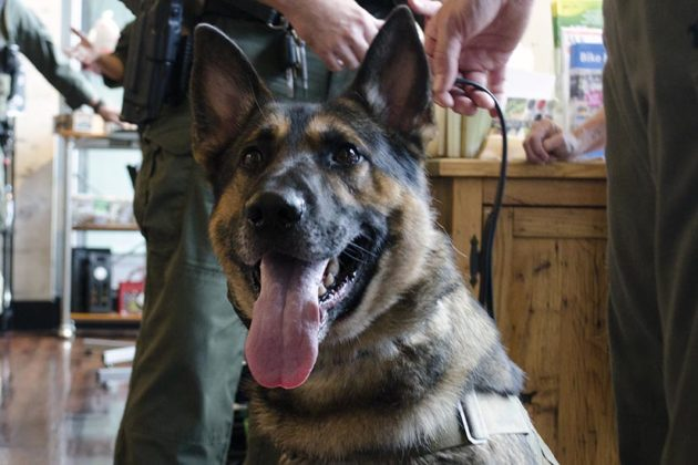 Duke, Arlington County Patrol Dog