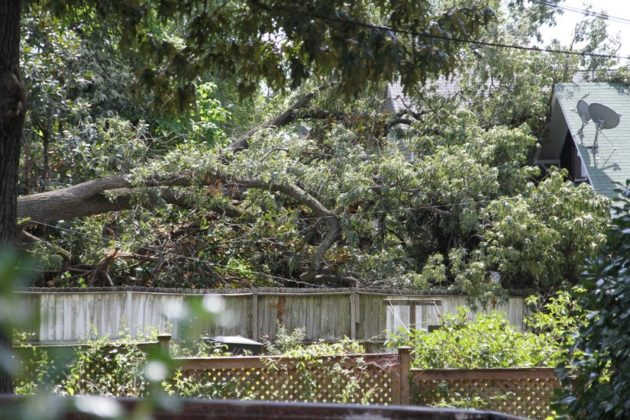 Downed tree on the 400 block of N. Fillmore Street