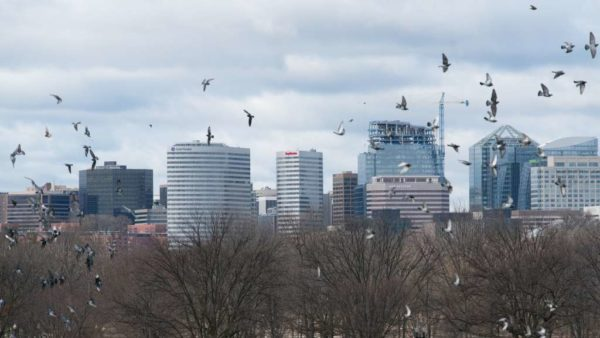 Rosslyn skyline and birds (Flickr pool photo by John Sonderman)