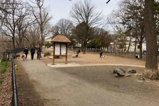 Shirlington dog park