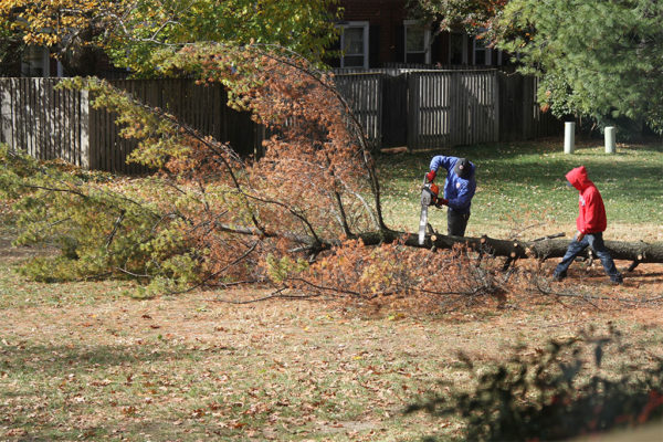 Tree cut down in Fairlington