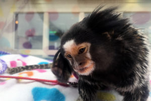 Monkey behind glass, photo via flickr user Todd Money