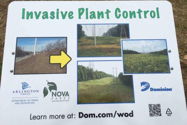 Meadow along W&OD Trail clearcut for invasive species control (photo courtesy Chris Slatt)