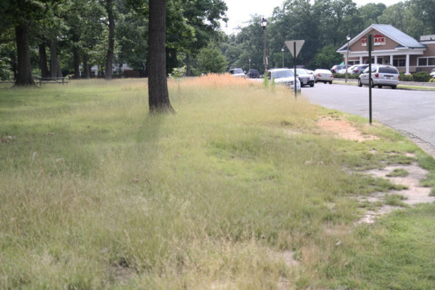 Grass grows where the new sidewalks would be