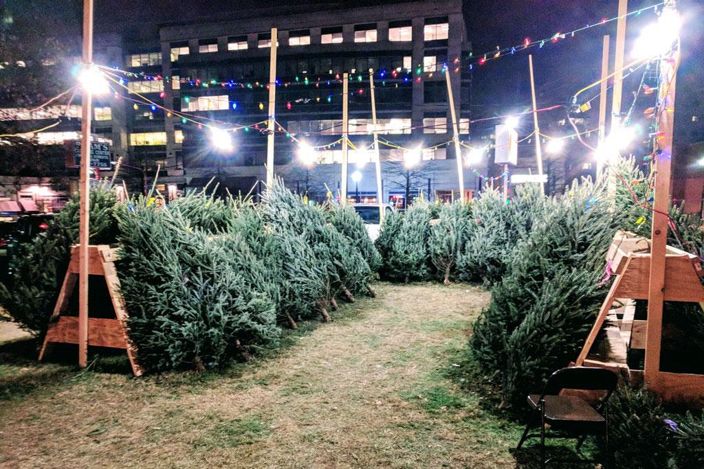 Free Christmas Trees At Lions Club Lot