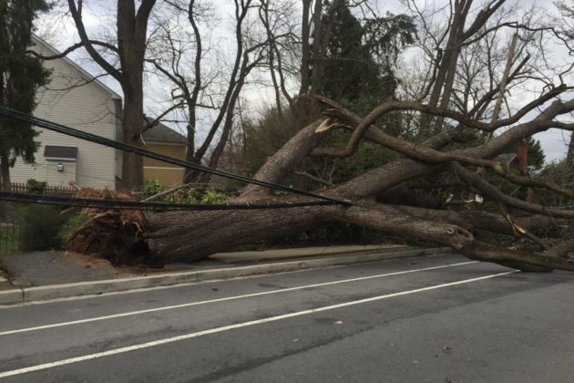 Downed tree and power line at N. Harrison Street and 26th Street N. (photo courtesy of John Luca)