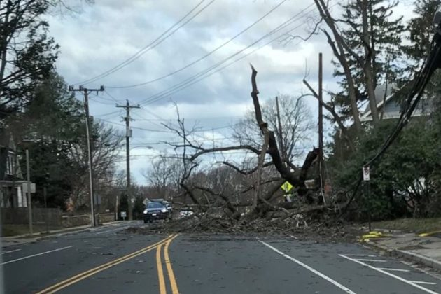 Downed tree and power line at N. Harrison Street and 26th Street N. (photo courtesy ACFD)