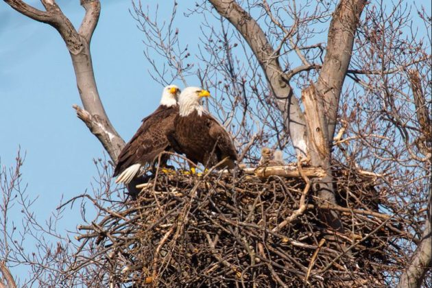 Eagles at Ft. Bennett Park (photo courtesy of GM and MB/Flickr)