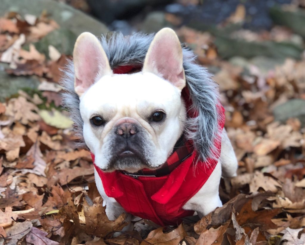 2448e925df9e9 » Arlington Pet of the Week  Henri – ARLnowThe Doggy Blogger