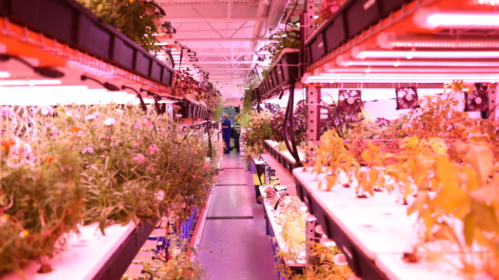 arlnow.com - Arlington's Only Commercial Farm to Expand, Double Production